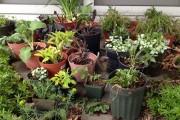 Plant_Sale_03